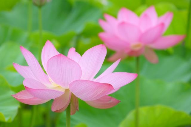 仏壇に飾る花に決まりはあるの?【種類や選び方など仏花について徹底解説】
